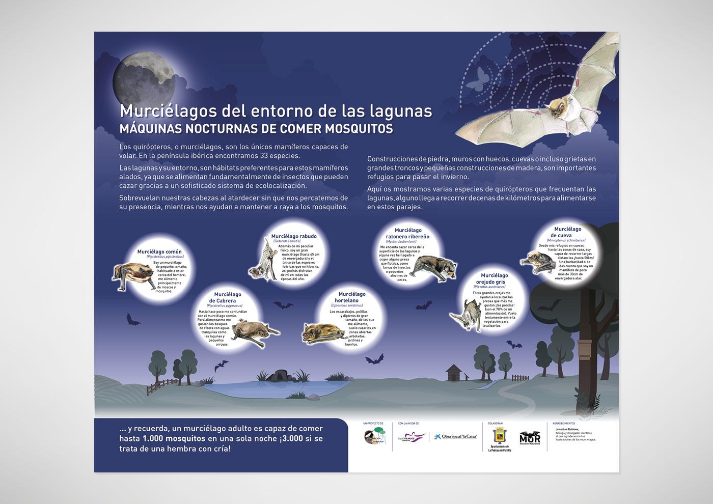 Asociación Garrapinos - Panel murciélagos - Ivan Diez
